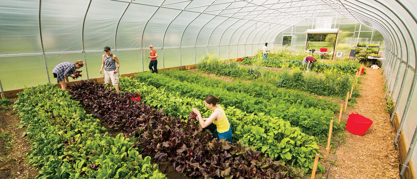 People working in a greenhouse with plants covering the ground.