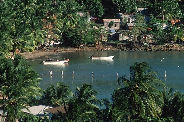 Paddle boats in water with palm trees and small buildings on land
