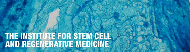 The Institute for Stem Cell and Regenerative Medicine, close up of cells that have been dyed blue