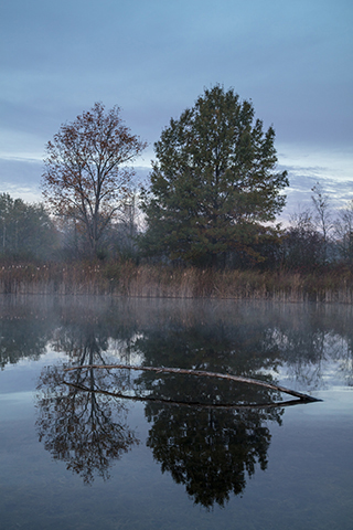 Morning Mist and Snag, Huron River Headwaters