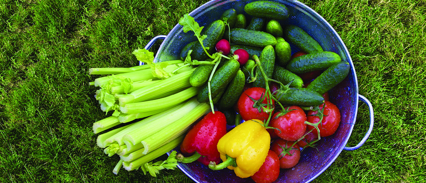 Basket of celery, cucumbers, peppers, radishes and tomatoes